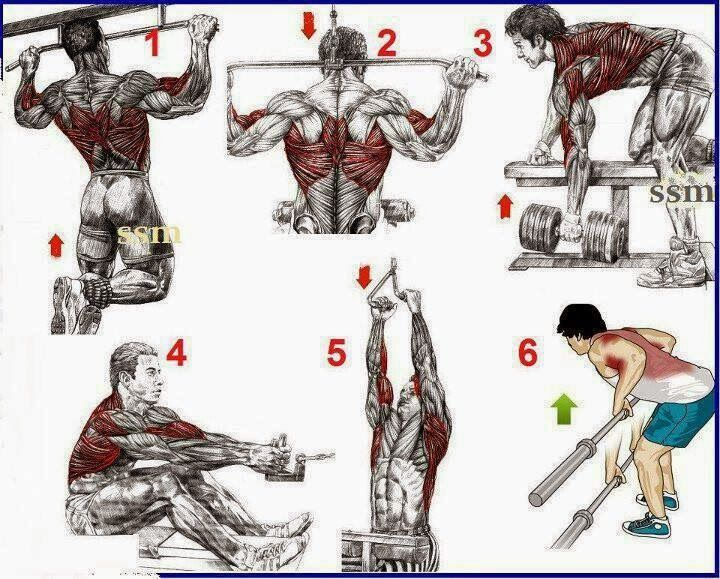 Fitness Bodybuilding This A Simple Exercises For The Beginings