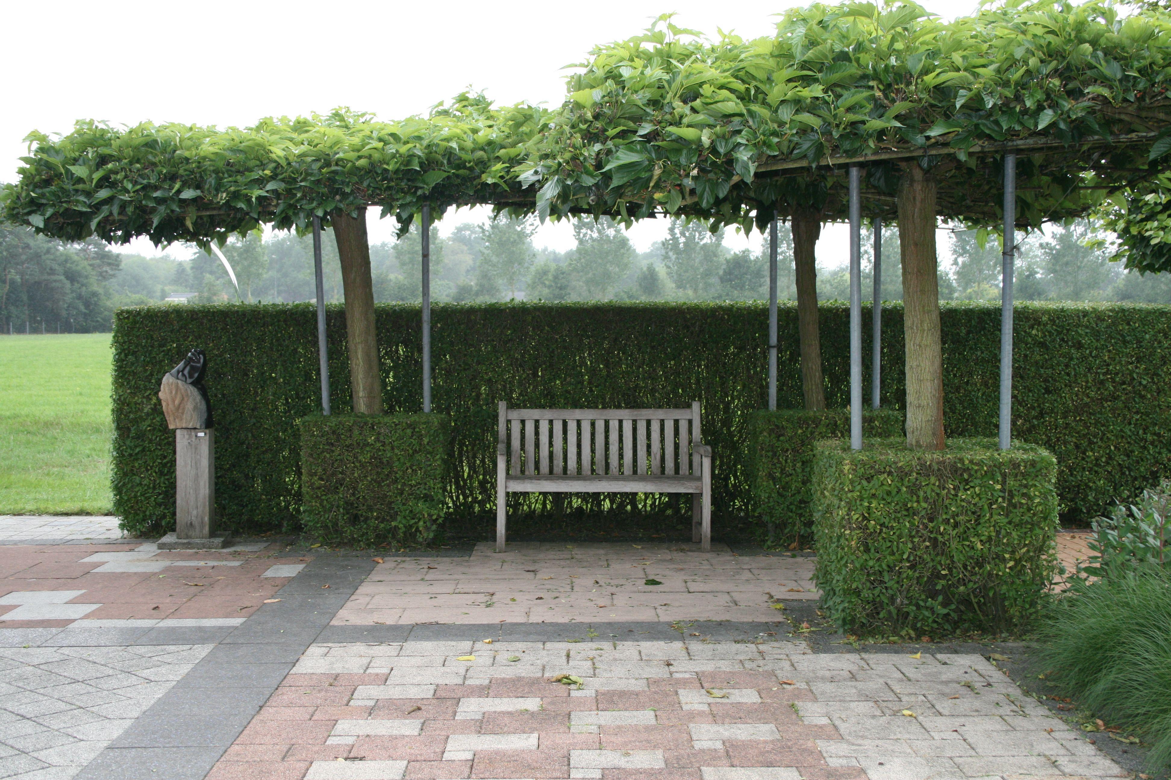 B ume schirmplatane gartenreise belgien holland for El jardin portugalete