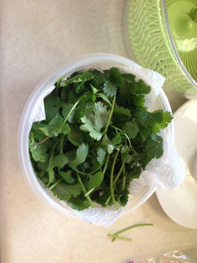 How to keep cilantro fresh in the fridge cilantro