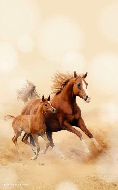 صور حصان صور خيول عربية أصيلة صور خيل Horses Horse Wallpaper Beautiful Horses
