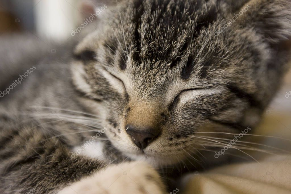 Close Cute Sleepy Kitty - Stock Photo , #Aff, #Sleepy, #Cute, #Close, #Photo #AD #sleepykitty Close Cute Sleepy Kitty - Stock Photo , #Aff, #Sleepy, #Cute, #Close, #Photo #AD #sleepykitty Close Cute Sleepy Kitty - Stock Photo , #Aff, #Sleepy, #Cute, #Close, #Photo #AD #sleepykitty Close Cute Sleepy Kitty - Stock Photo , #Aff, #Sleepy, #Cute, #Close, #Photo #AD #sleepykitty