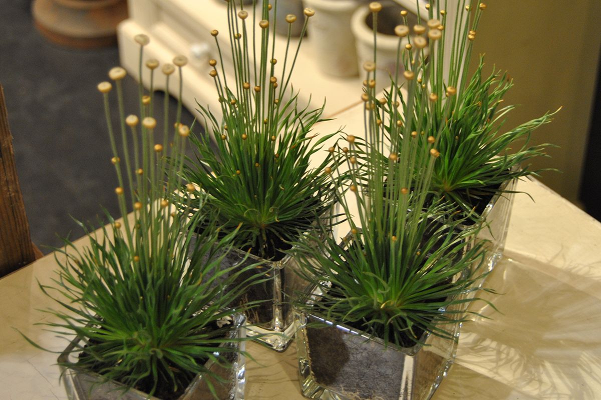 Arbre Fruitier En Pot Interieur plantes en pot d'intérieur : tentez l'originalité avec