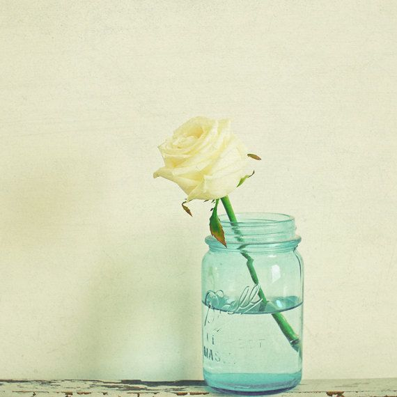 Cream Rose - Still Life Flower Photography by LolasRoom.