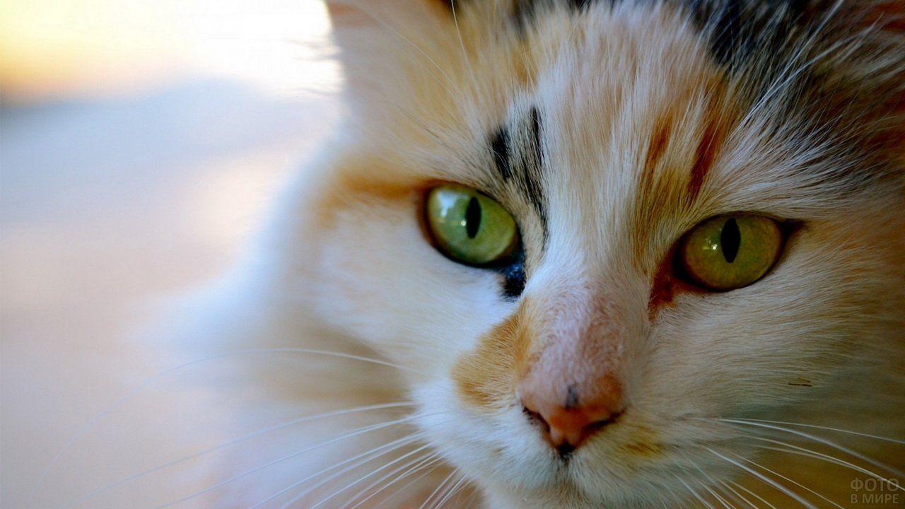 Глаза кошки (36 фото) в 2020 г   Кошки и котята, Смешные ...