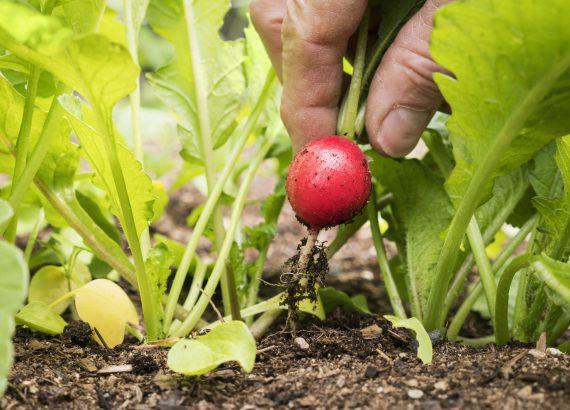 18 fruits et légumes à planter à la rentrée | Potager, Idee legume, Potager legumes