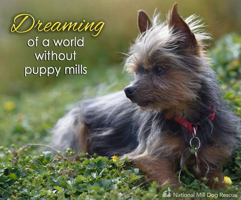 We will never quit dreaming of a world without puppy mills