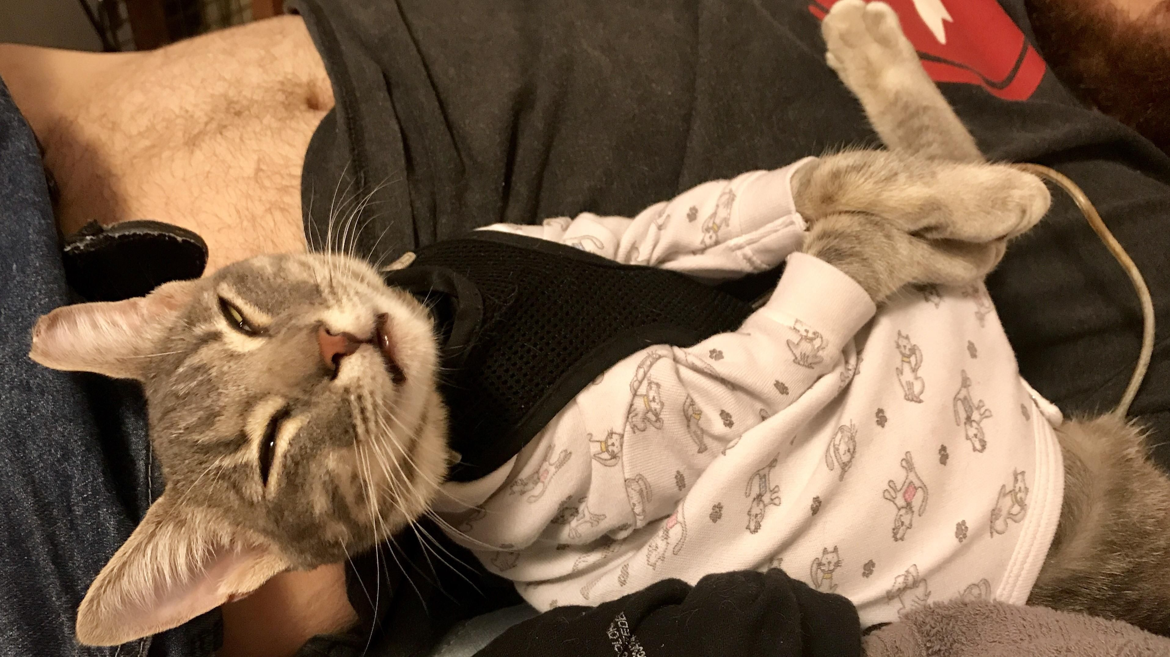 Pin by My Animal on Awww Animals&Babies Cats, Cat