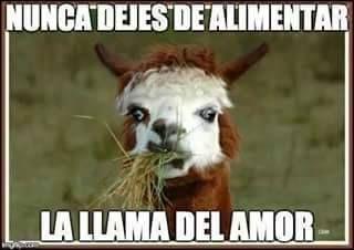 La Llama Del Amor Animals Funny Memes