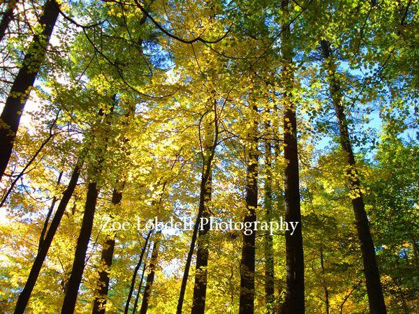 Trees by Zoe Lobdell