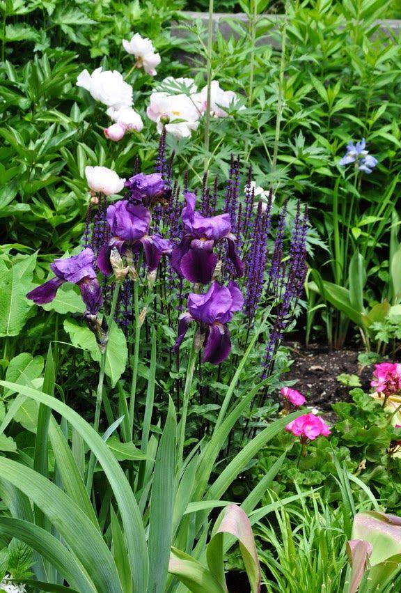 Three Dogs In A Garden Two Very Grand Gardens Annuals Landscaping Purple Garden Iris Garden