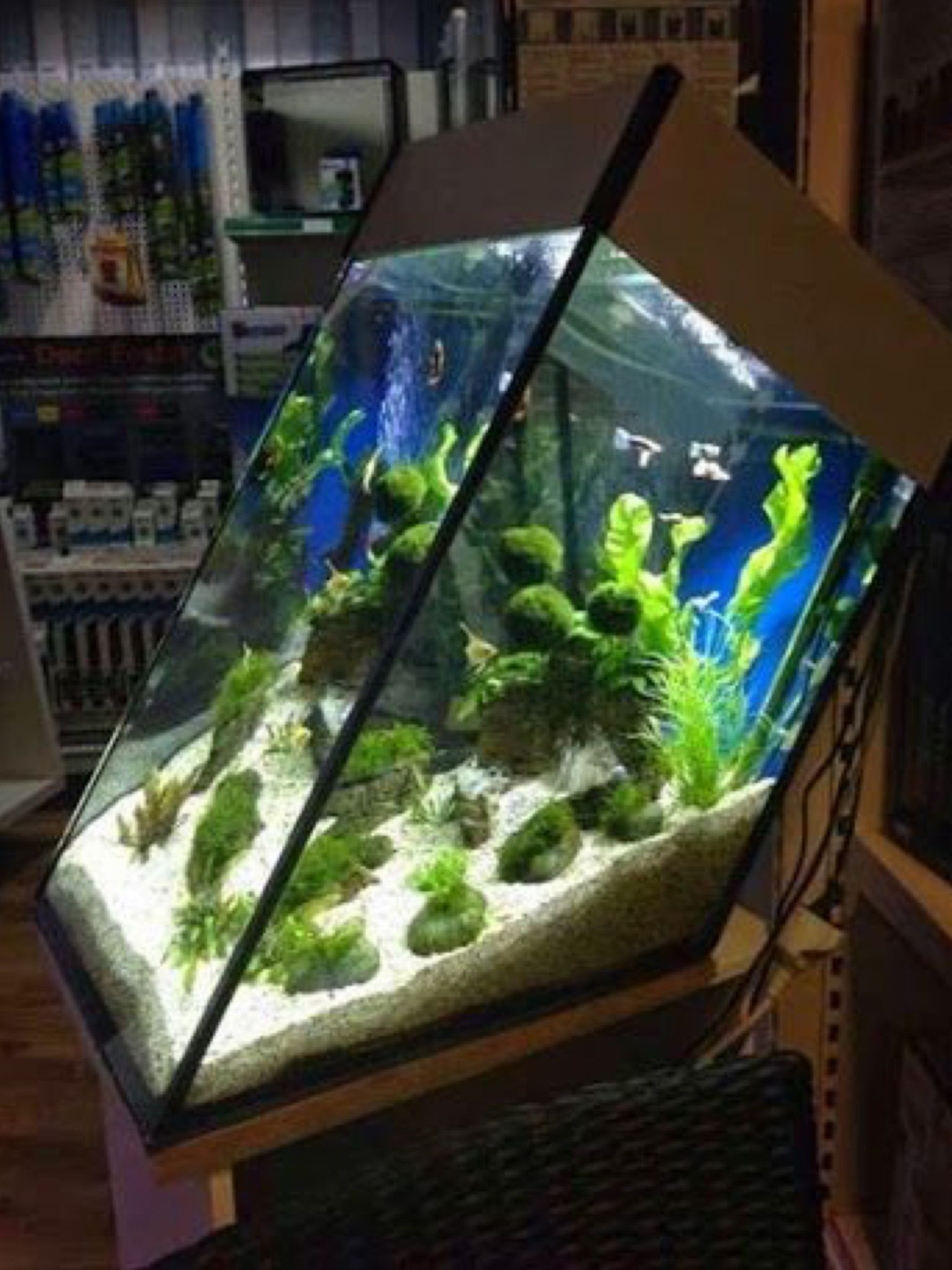Aquarium Fish Tank, Saltwater