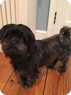 MCLEAN, VA - Schnauzer (Standard) Mix. Meet Koko, a dog for adoption. http://www.adoptapet.com/pet/17538940-mclean-virginia-schnauzer-standard-mix