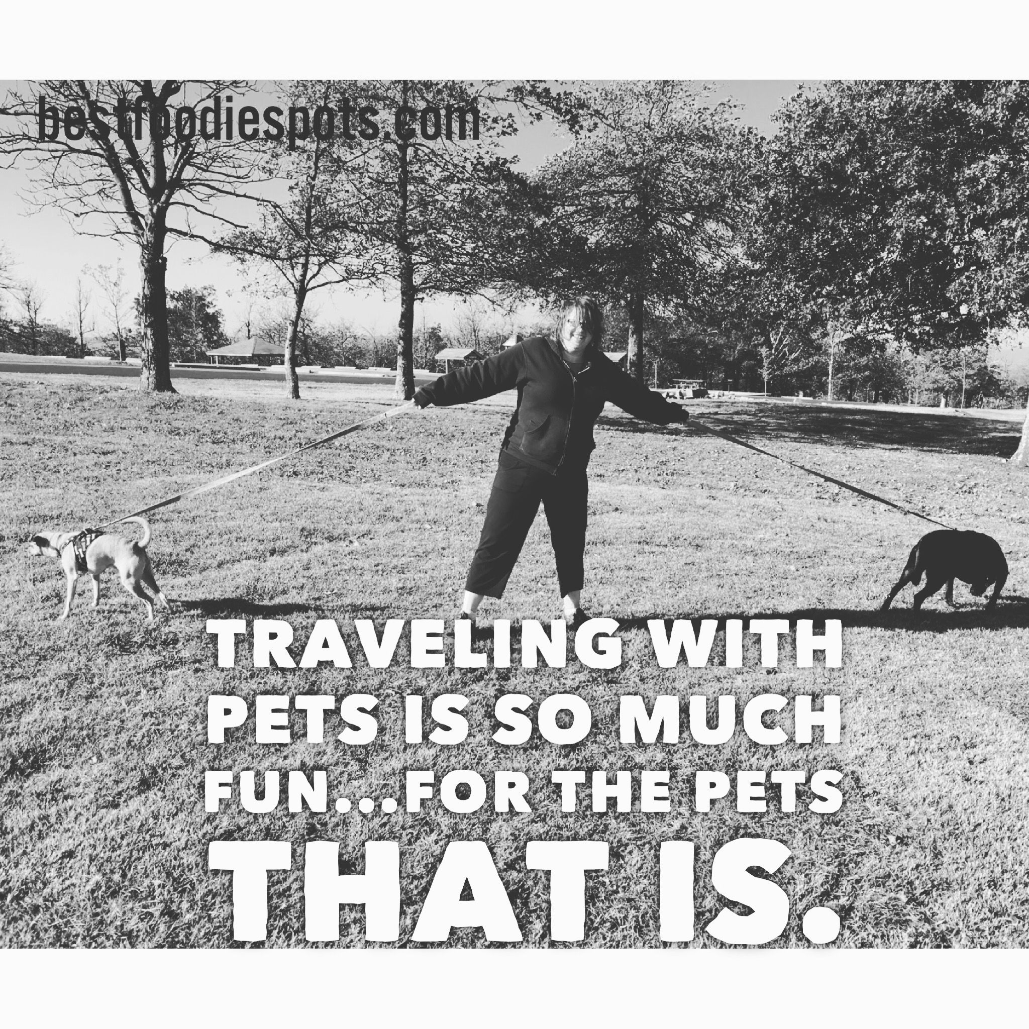 Traveling With Pets Is Often A Tricky Business Pet Travel Pets Travel