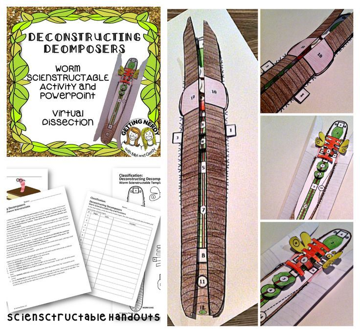 Earthworm Dissection - 3-D Paper Model | Models, Notebooks and Paper