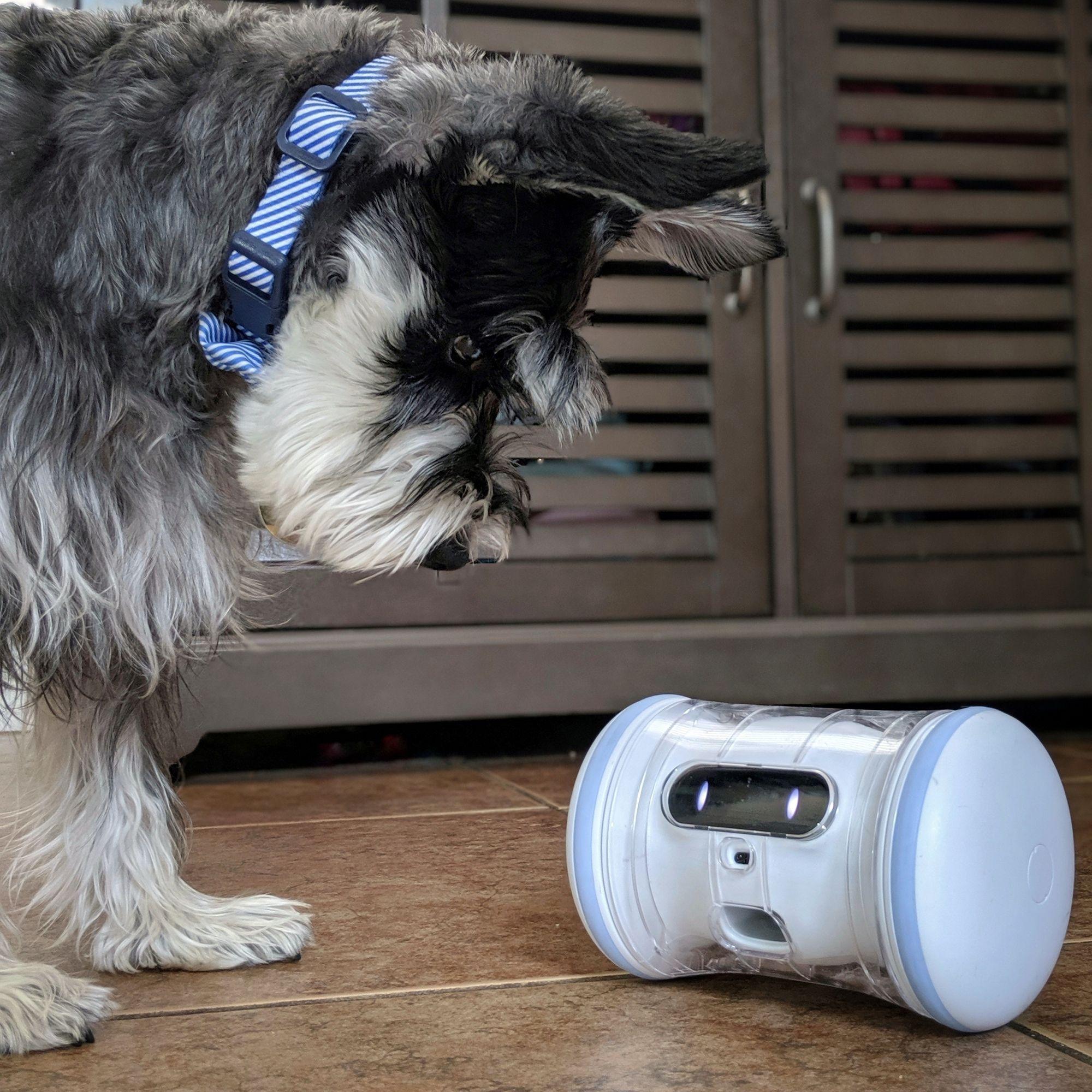 Pin By Varram On Varram Pet Fitness Robot Home Appliances Pets