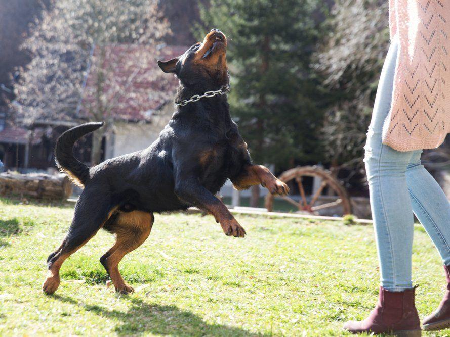 Euer Hund Springt Euch Nicht Vor Freude An Wenn Ihr Nach Hause Kommt Sagt Hundetrainer Rutter In 2020 Hundetrainer Hunde Hundchen Ubung