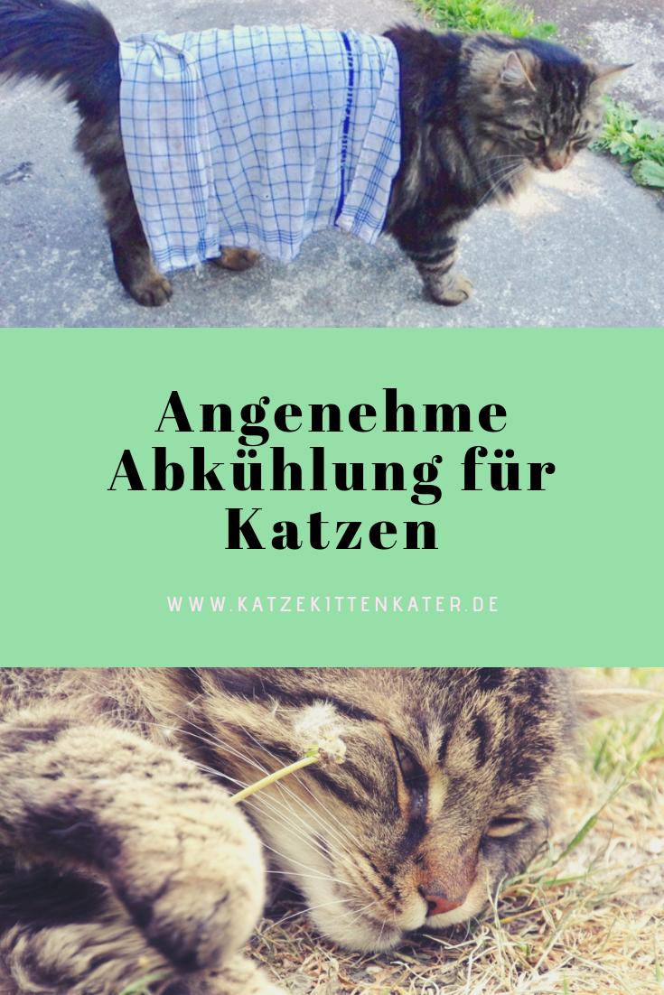 Abkühlung für Katzen #katzengeburtstag