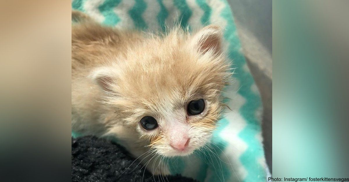 This Orphaned Kitten Wasn't Going To Survive. Luckily, A