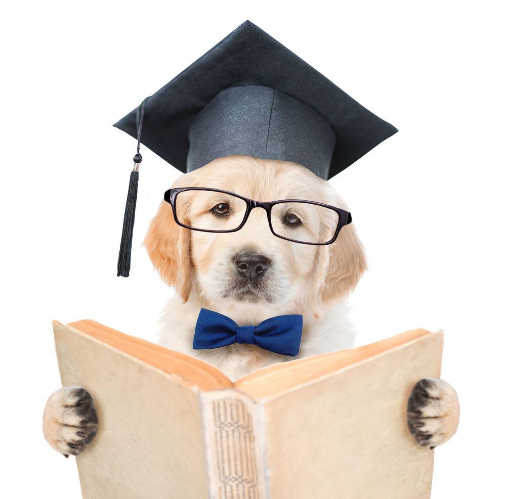 Wonderful Graduation Cap Black Adorable Dog - 90ec6e0d493265c5e6a5f86eb3e39bf8  Pic_2510046  .jpg