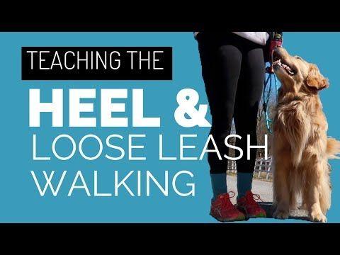 Competition Focused Heeling Part 1 Foundation Dog Training Video