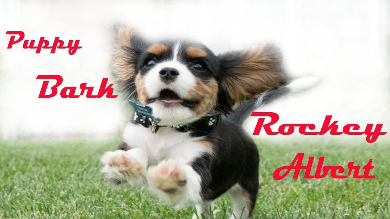 Puppies barking a cute dogs barking videos compilation cute