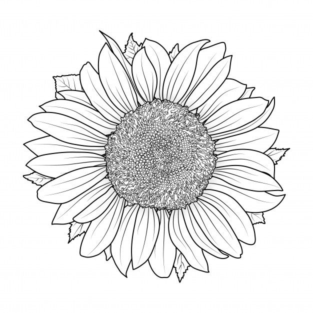Sunflower For Coloring Book Flower Art Drawing Sunflower Colors Sunflower Coloring Pages