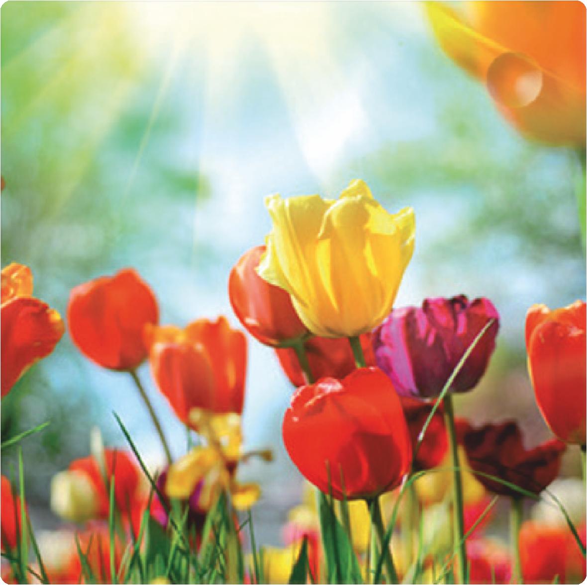 Ebenerdige Duschwanne Tulben | Kukkia - Flowers | Pinterest