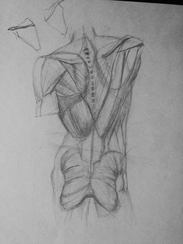 Anatomy study by Ertrera