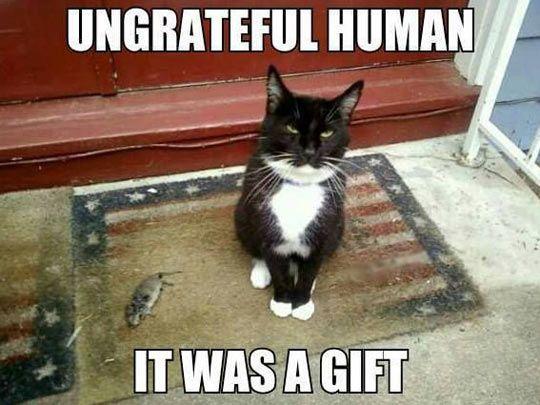 Ungrateful human… | Humor divertido sobre animales, Imágenes divertidas de  animales, Gatitos divertidos