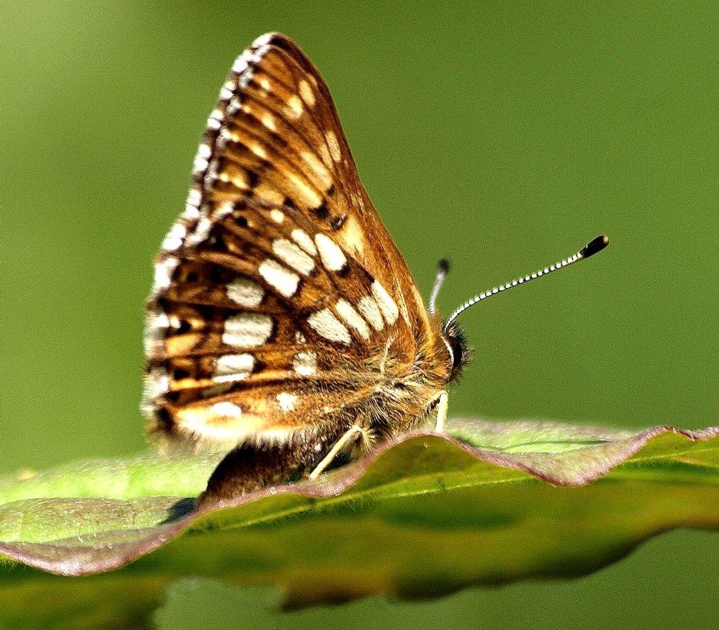 Rare Animals Top 10 Rarest Butterflies in the World