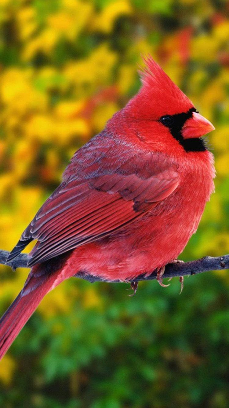 Animal iPhone 6 Wallpapers 131 Most beautiful birds