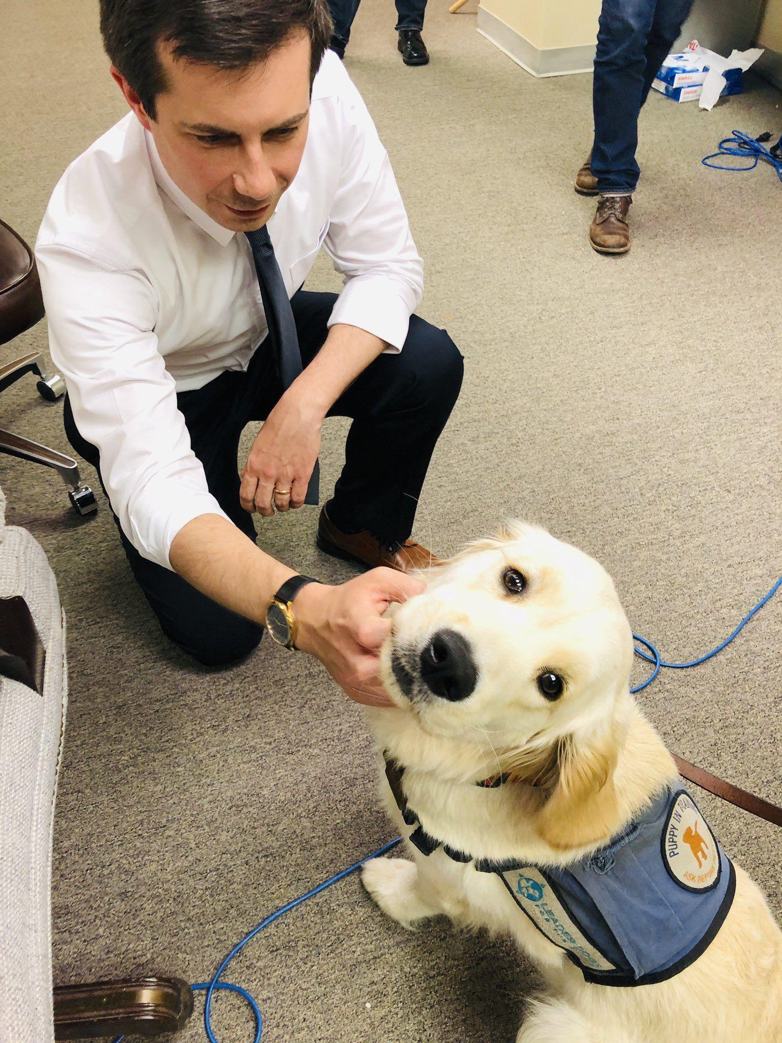 Greta Carnes On Twitter Guide Dog Pete Dogs