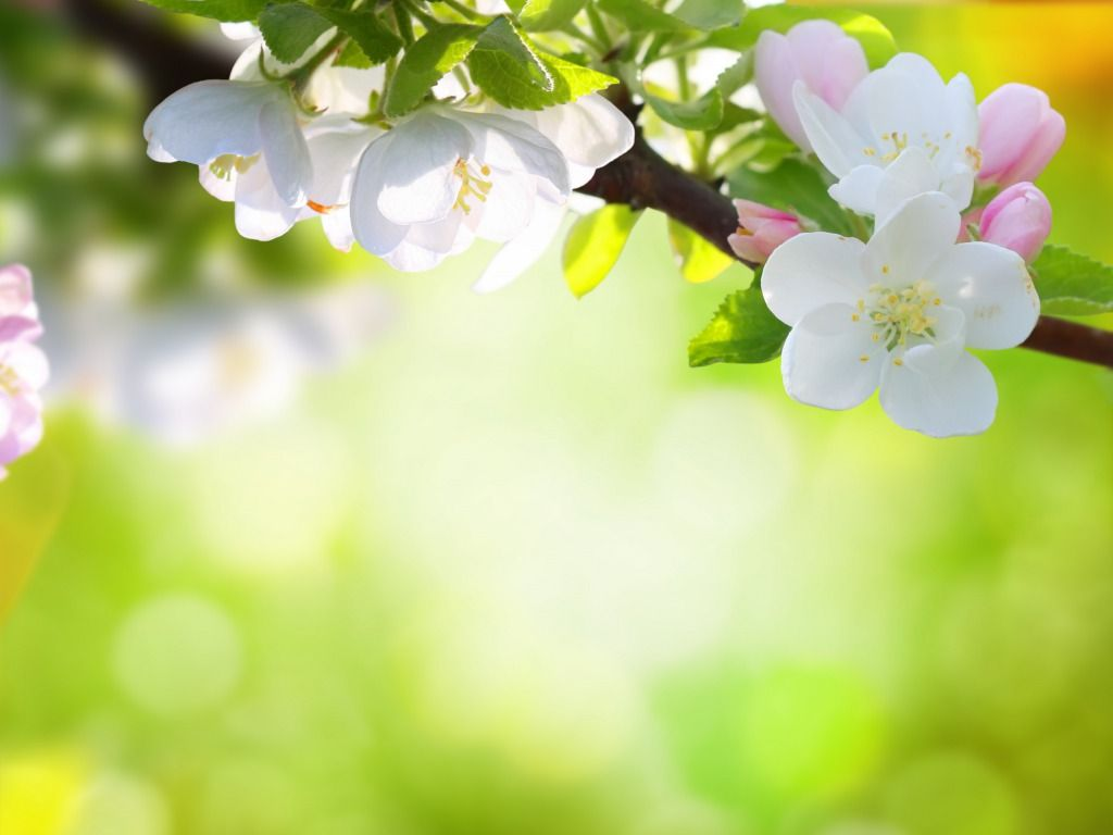 Spring Flowers Background Natures Wallpapers In 2018 Pinterest