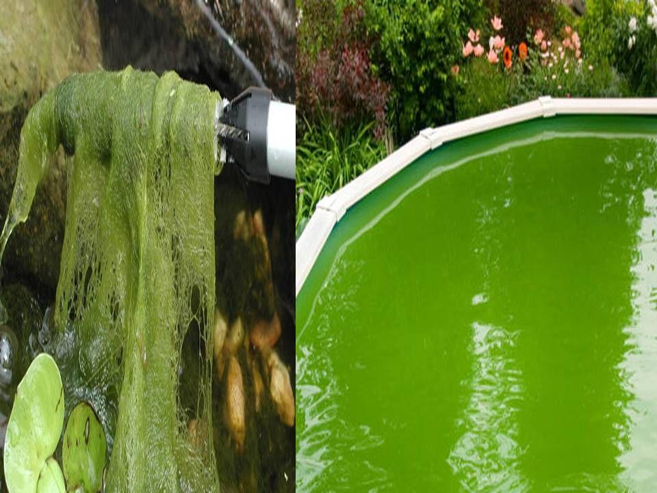 90f1912c02dfaca9d8d952870b3beaf8 - How To Get Rid Of Moss In A Farm Pond