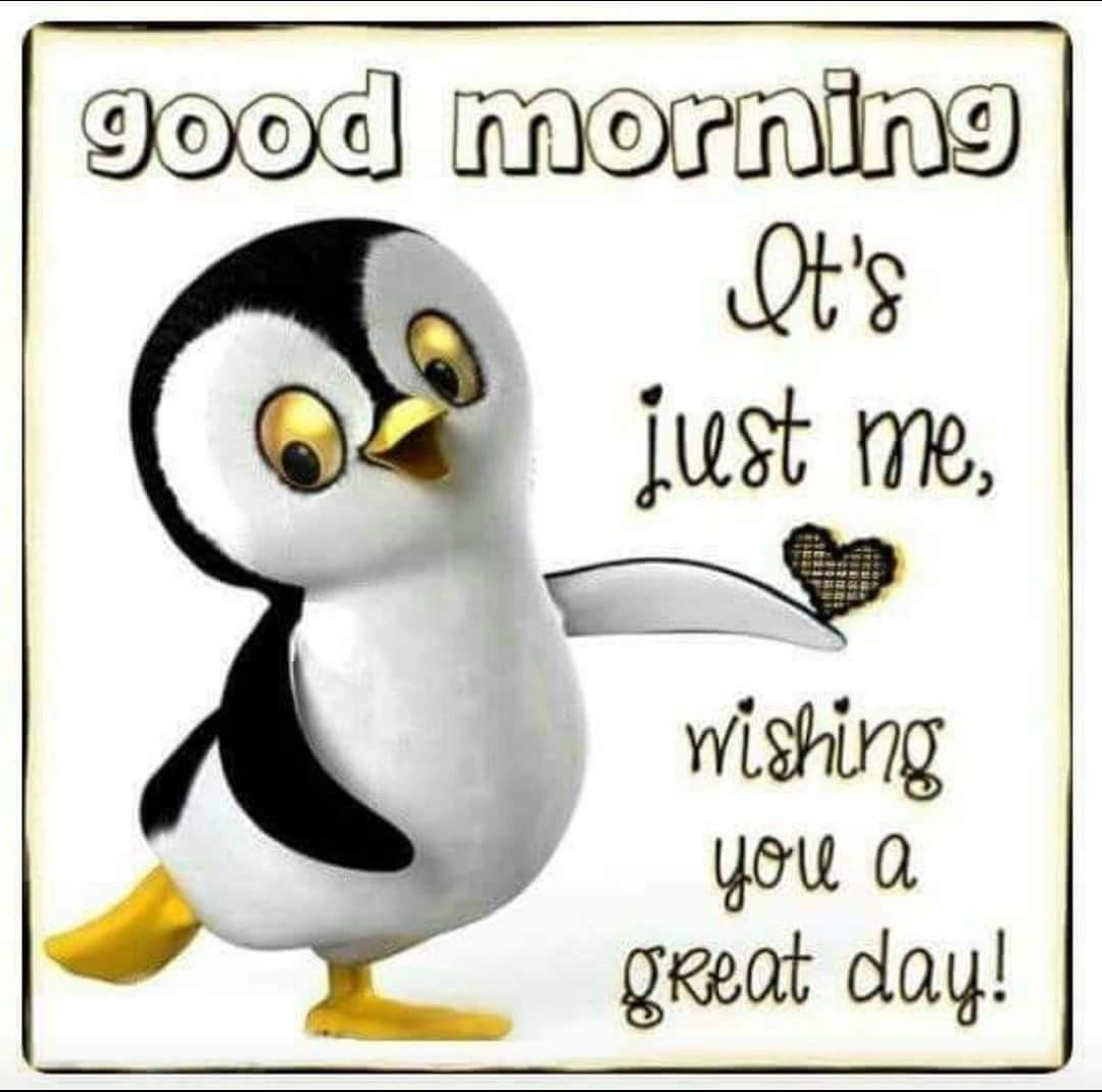 I Love Penguins Pictures Pinterest Penguins Morning Images