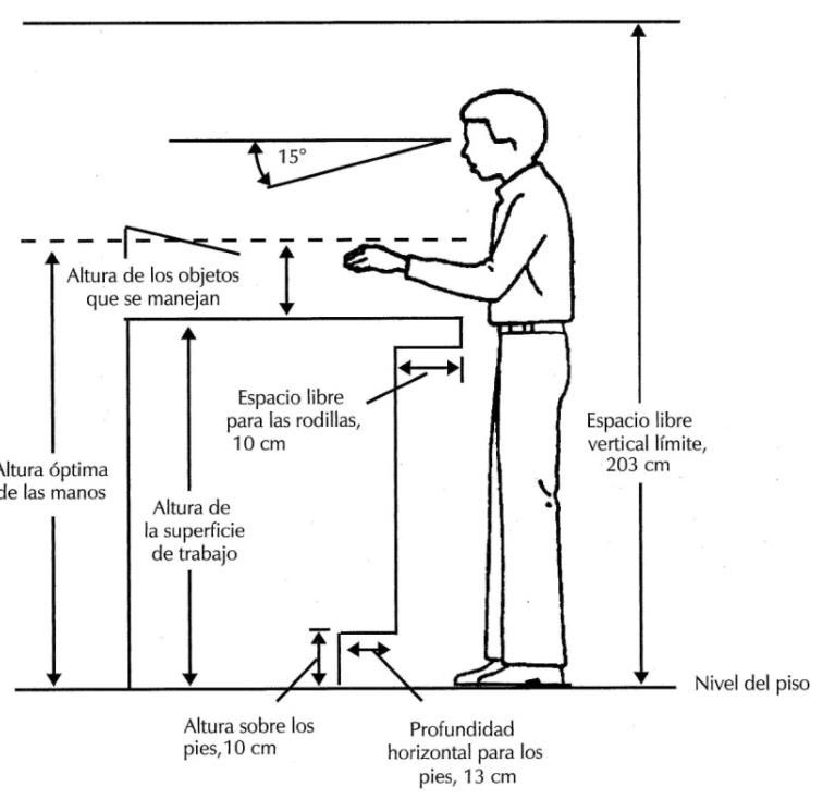 Resultado de imagen para altura de una mesa de trabajo for Antropometria estatica
