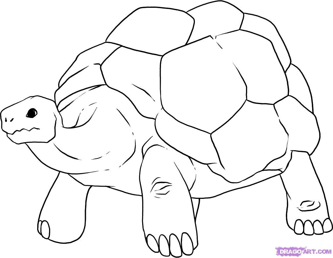 How To Draw A Tortoise Step By Reptiles Animals FREE