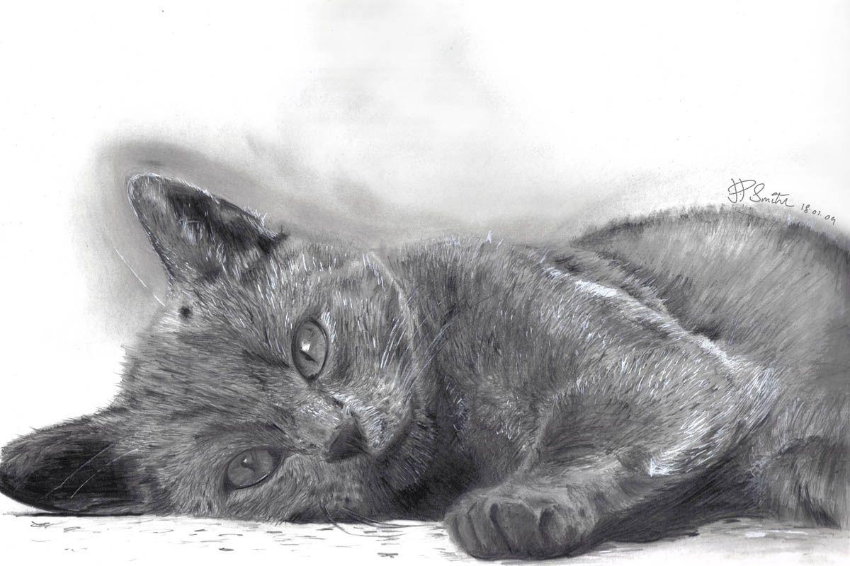 Jamie Paul Smith Grey Cat Jamiepaulsmith Blogspot Com Cat Animal Pictures Grey Cats Cat Drawing