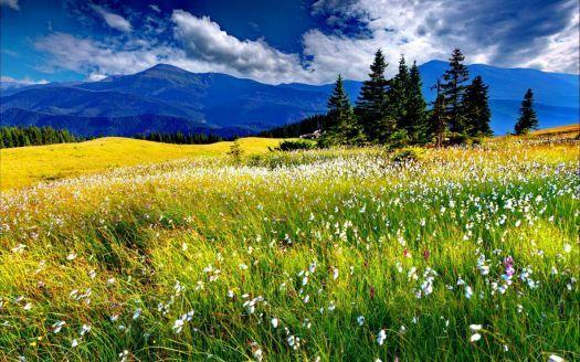 Spring Meadow In Norway 135 Pieces Summer Landscape Landscape Mountain Landscape