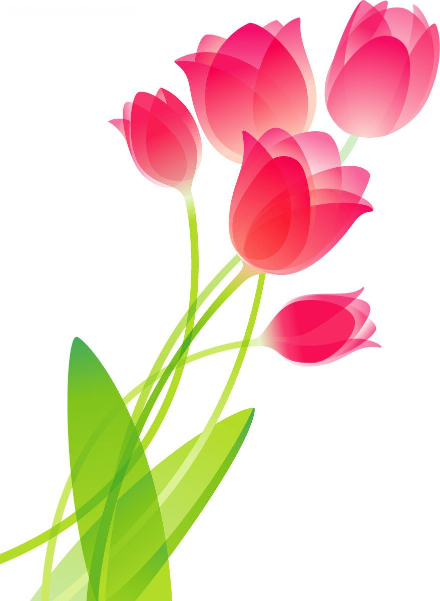 Tulips Pretty Flowers Pinterest Flower Drawings Drawing