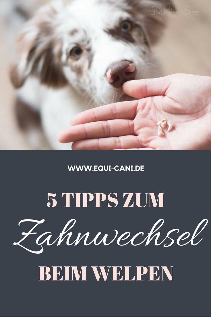 5 Tipps zum Zahnwechsel beim Welpen » EquiCani Hundeblog