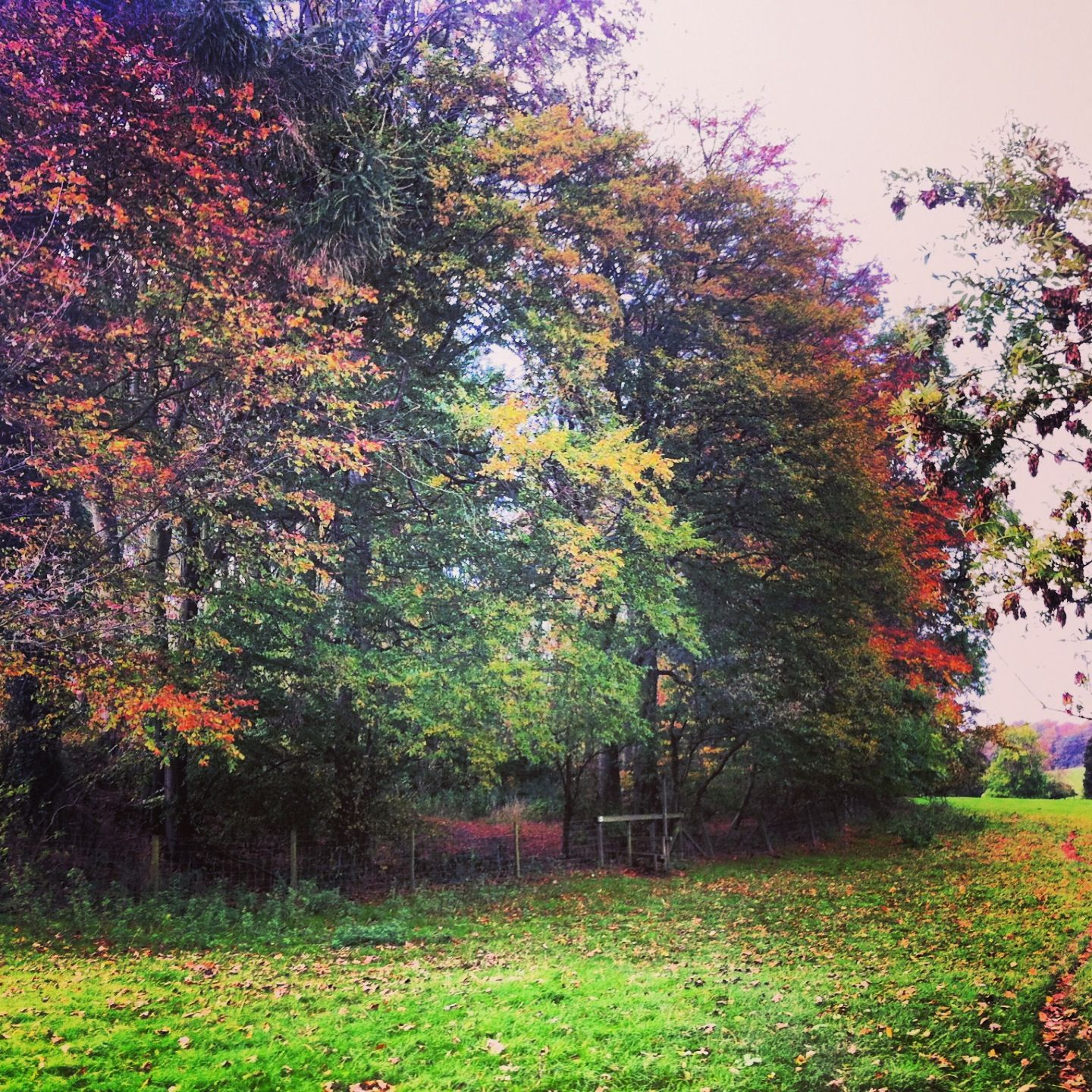 The colours of autumn | The beautiful Countryside in ...
