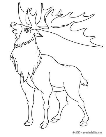 There Is A New Reindeer In Coloring Sheets Section Check It Out In Forest Animals Coloring Pages Le Animal Coloring Pages Horse Coloring Pages Coloring Pages