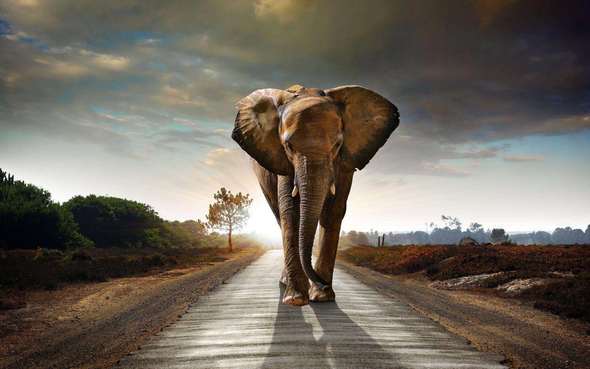 Stunning Elephant Wallpapers Desktop Images Of Stunning