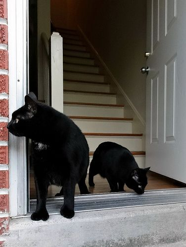 Just Black Cats