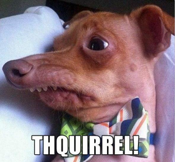 Smiling Dog Imagenes Divertidas Perros Feos Huesos Graciosos
