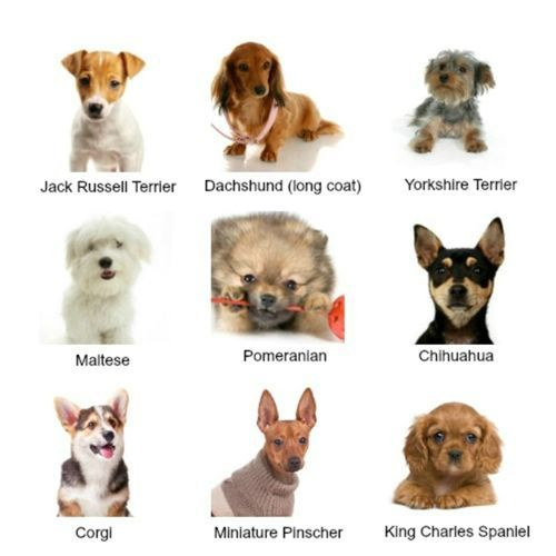 Small Dog Breeds With Pictures Collage Types Of Small Dogs Dog Breeds List Mini Dogs Breeds