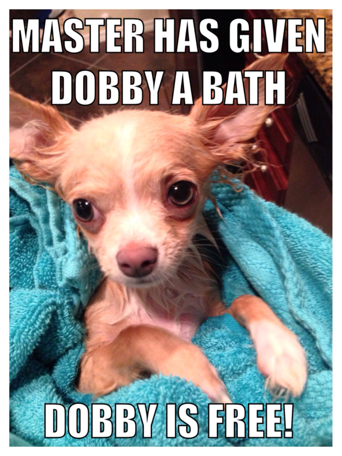 Funny Puppy Meme Love The Harry Potter Reference Dog Memes Clean Puppies Funny Funny Puppy Memes