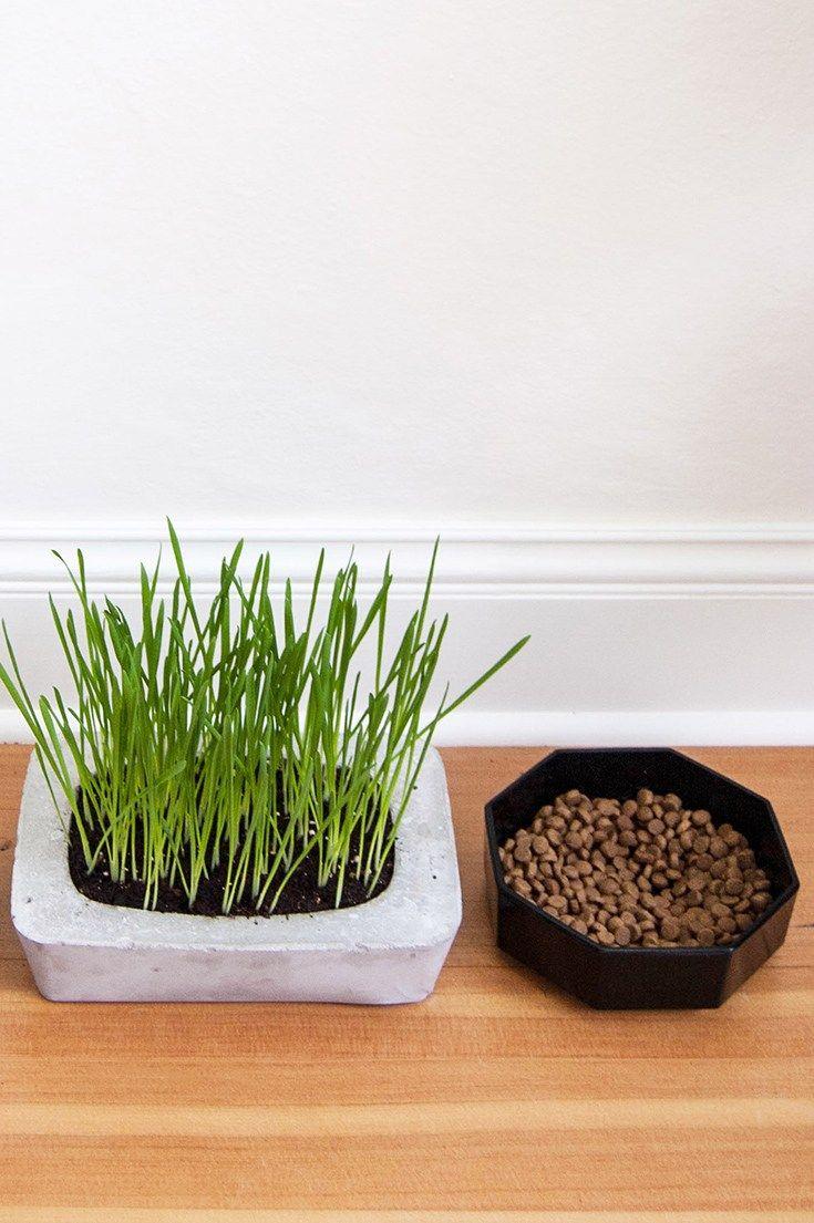 Cat Grass DIY Concrete Planter Diy concrete planters