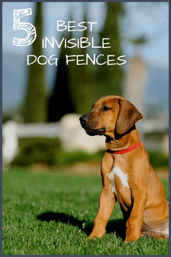 5 Best Invisible (Underground) Dog Fences with our